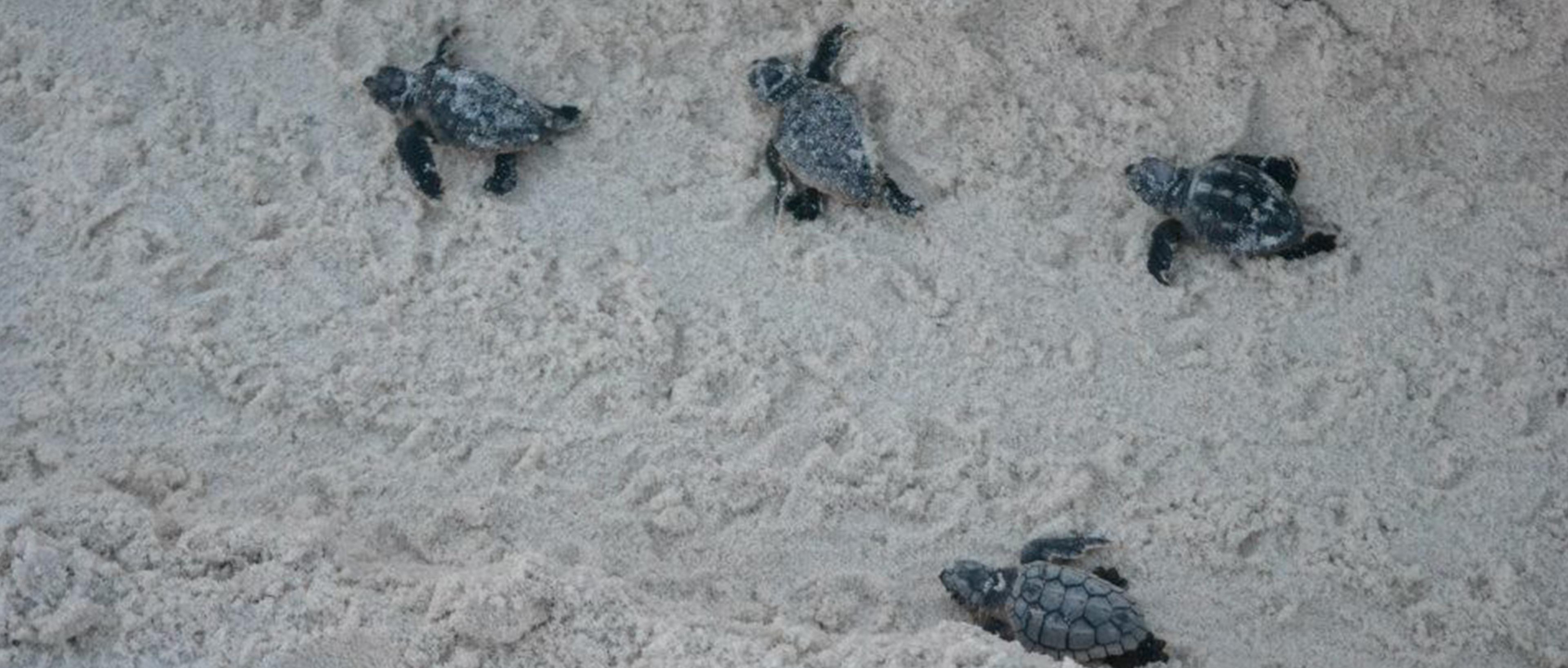 Turtlesblog